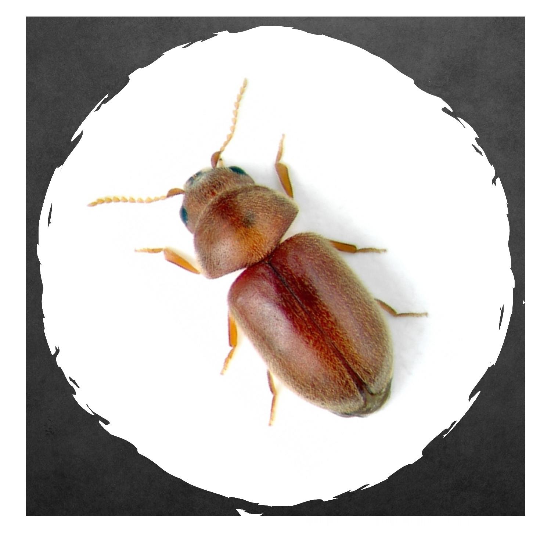 Exodus Exterminating- Pantry Pests | Exodus Exterminating Inc.
